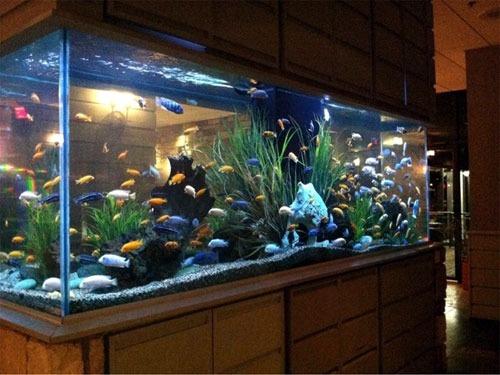 Bể kính nuôi cá bền đẹp