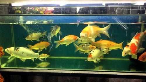 Bể kiếng nuôi cá làm bằng kính cường lực cao cấp tại TpHCM