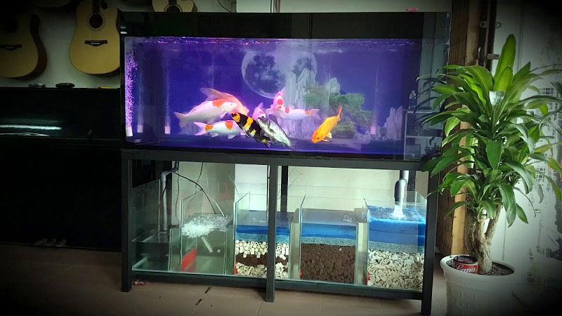 Bể kiếng cường lực nuôi cá giá rẻ tại TPHCM